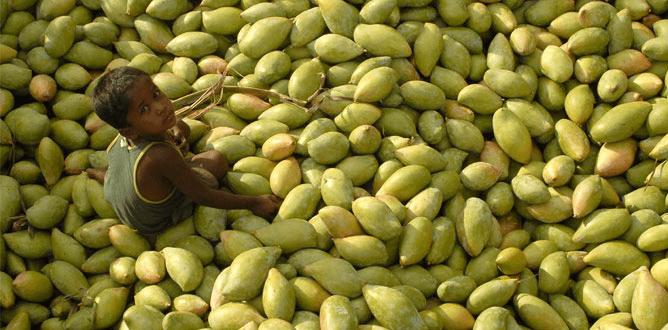 Foto: Rediff. India es el mayor productor de mangos del mundo.